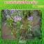 โนมิน่า สารอินทรีย์กำจัดวัชพืชในนาข้าว thumbnail 7
