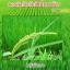 โนมิน่า สารอินทรีย์กำจัดวัชพืชในนาข้าว thumbnail 15