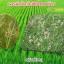โนมิน่า สารอินทรีย์กำจัดวัชพืชในนาข้าว thumbnail 8