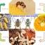 สารล่อและกำจัดแมลงวันทอง thumbnail 5