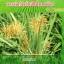 โนมิน่า สารอินทรีย์กำจัดวัชพืชในนาข้าว thumbnail 10