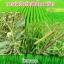 โนมิน่า สารอินทรีย์กำจัดวัชพืชในนาข้าว thumbnail 6