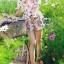 พร้อมส่ง เสื้อผ้าแฟชั่น พิมพ์ลายดอกซากุระสีชมพูหวาน thumbnail 4