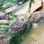ชุดเดรสเกาหลี พร้อมส่ง เดรส คอวี แขนกุด เอวยางยืด thumbnail 4