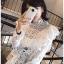 เสื้อเกาหลี พร้อมส่ง เสื้อผ้าคอตตอนสีขาวทรงคอสูง thumbnail 7